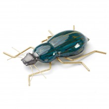 Beetle Color. Mambo